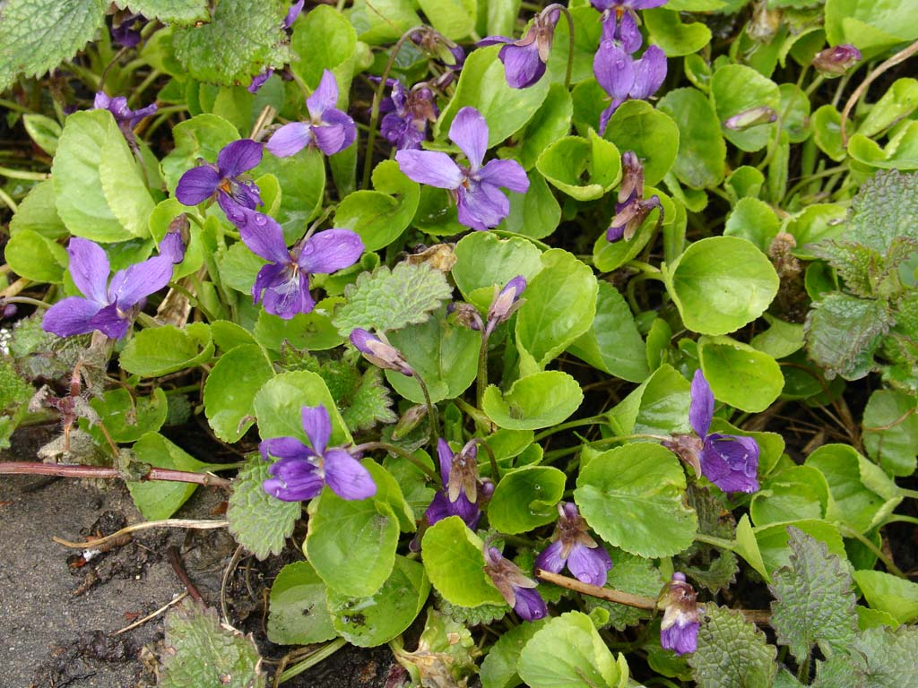 Фото цветов весны весенняя клумба  Любимые цветы